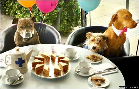 Dog Friendly Eateries York