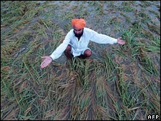 Farmer in Punjab