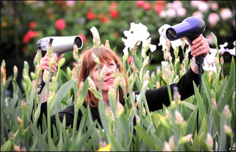 Woman drying flowers with hairdryers at Chelsea Flower Show
