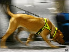Sniffer dog at Heathrow airport