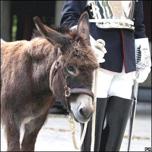 A donkey adopted by the Society for the Protection of Animals Abroad