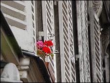 Flowers on a window ledge (Image: BBC)