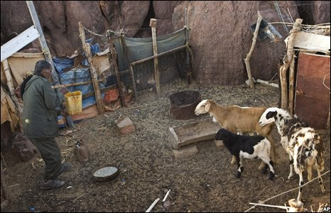 Pro-independence Polisario Front fighter feeds his animals in Tifariti