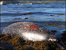Headless seal