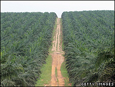 Palm oil plantation (Getty Images)