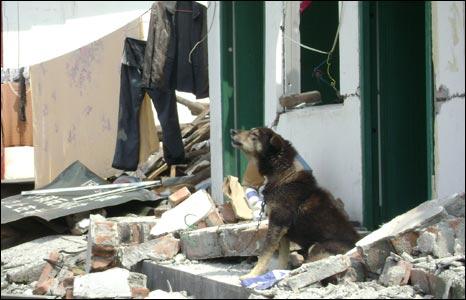 dog whines near Longmenshan
