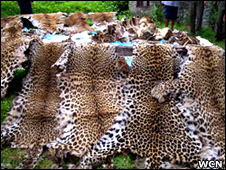 Wildlife seizures (WCN)