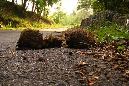 Wild elephant dung on the road leading to Balpakaram national park