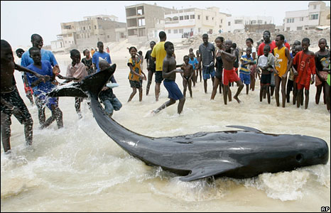 People look on at a beached whale in Senegal