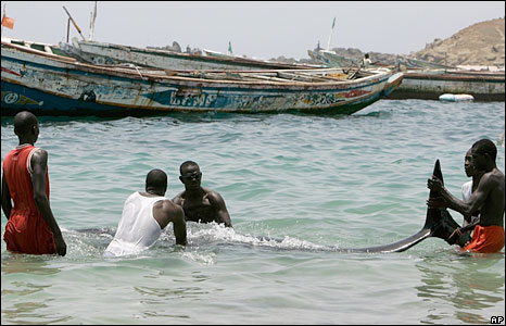 People in Senegal helping whales to swim away from a beach in Senegal