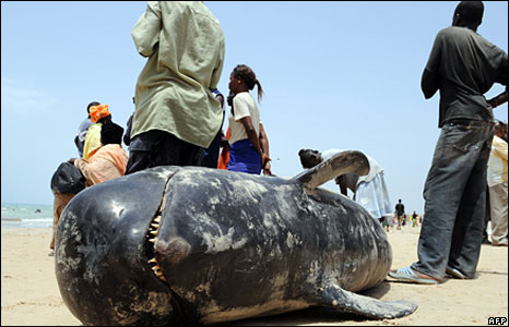 A close-up of a dead whale on a beach in Senegal