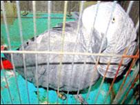 Иосуке в родной клетке. Фото 21 мая 2008 г.