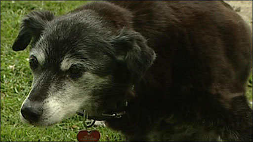 The oldest dog in the world