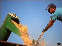 Cosecha de arroz en José Pedro Varela, Uruguay, unos 260 kms al noreste de Montevideo