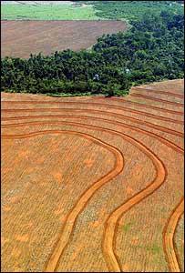 Plantaciones de soya tras la tala de bosques en el estado de Pará, Brasil (Foto: Greempeace)