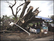 An uprooted tree in Rangoon, Burma, on 21 May 2008