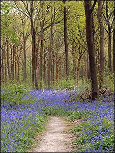 Woodland (Image BBC)