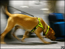 Sniffer dog at airport - file photo