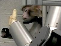 Mono con brazo robótico (A Shwartz)