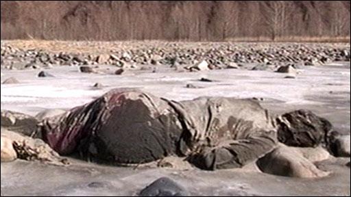 north korean women. The body of a North Korean