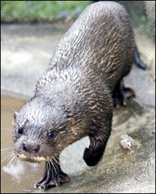 Otter, Dara (Pic:Conservation International (Cambodia))