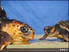 Blue Reef Aquarium Turtles