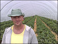 Patryk Ullrich, strawberry picker