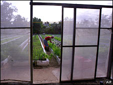 Hydroponic facility in Cuba. Image: AP
