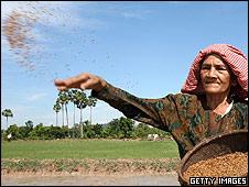 Rice farmer in Cambodia