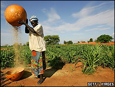 Millet farmer in Nigeria