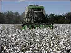 US cotton farmer harvesting