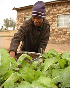 Woman tending her keyhole garden in Lesotho's central highlands