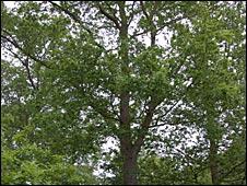Belfair's Wood, Southend
