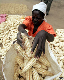 Woman puts maize into a bag in Domboshawa (23 April 2008)