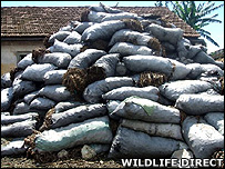 Sacks of seized charcoal (Image: WildlifeDirect)