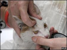 Kitten at a vet