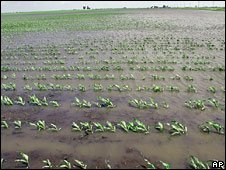 Corn field flooded in the US after bad weather