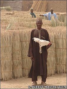 Nigerian market (Image: Daniele Perrot-Maitre/IUCN)