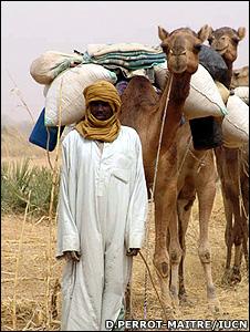 Nigerian camel caravan (Image: Daniele Perrot-Maitre/IUCN)