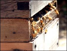 Bee hive (generic)