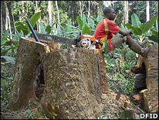 Man sitting on a tree trunk (Image: DfID)