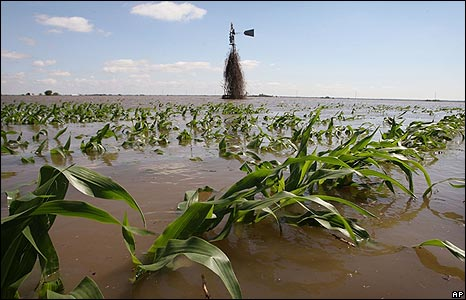 A corn field is submerged in flood water near Oakville, Iowa