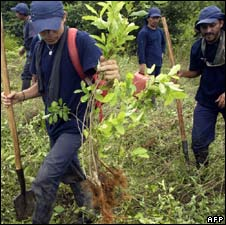 Group of peasants work on a manual eradication programme in Colombia in May 2008