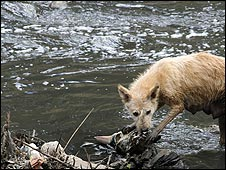 Dog scavenges for food in the sewage of the Kabena river
