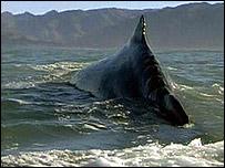 Lomo de ballena