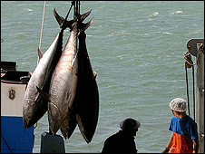 Tuna caught by Spanish fishermen (file pic)