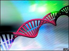 DNA molecule (SPL)