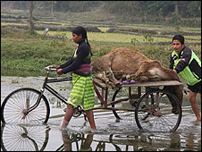 Cattle carcass on a rickshaw