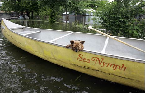 Lucy the terrier looks over the side of a canoe at flood waters from the Mississippi River, in the US state of Missouri, on 24 June 2008