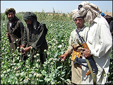 Taleban in opium field in southwest Afghanistan, April 2008